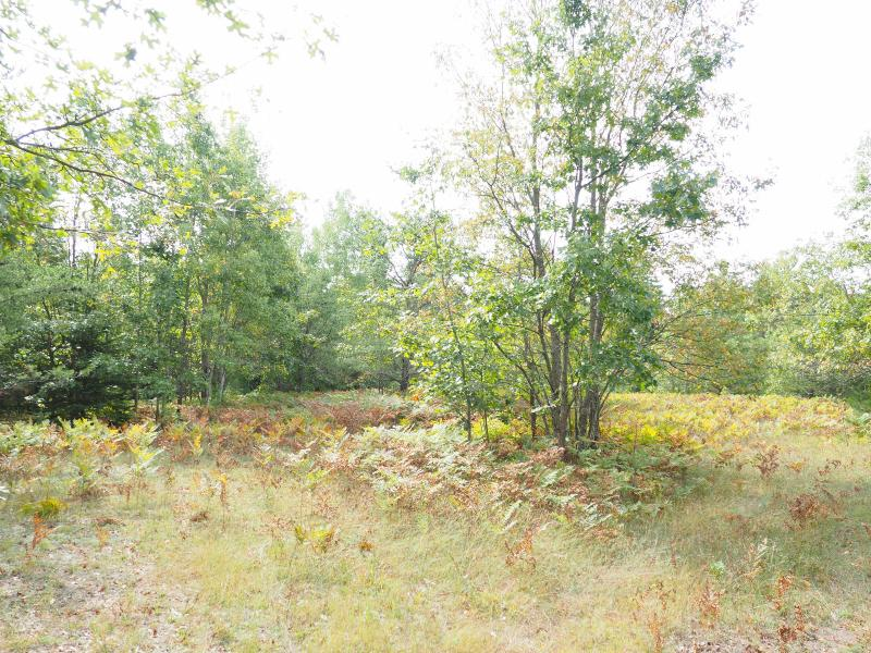 Listing Photo for Acreage Wilson Road